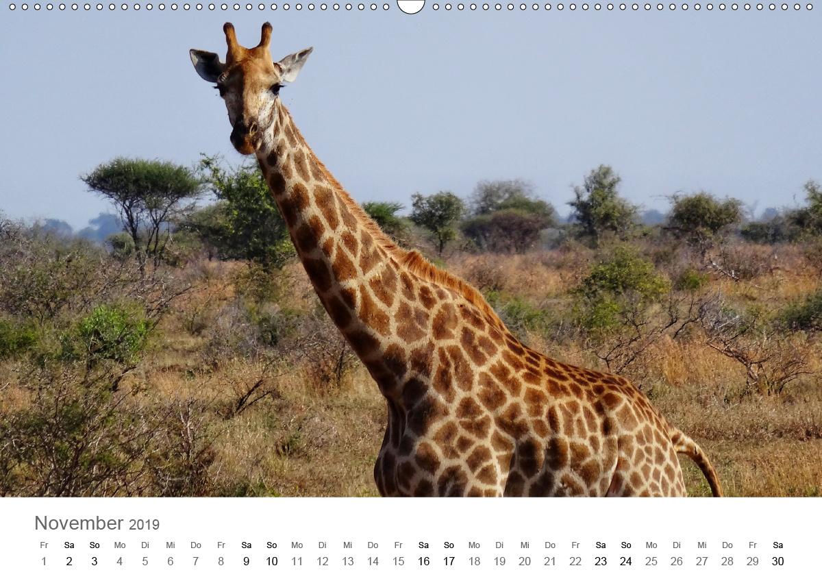 Kühlschrank-magnet Afrika Safari Natur Tierwelt Große Giraffe