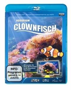 Image of Aquarium Clownfisch