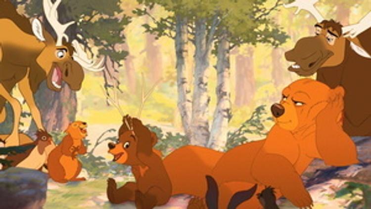 elche bärenbrüder