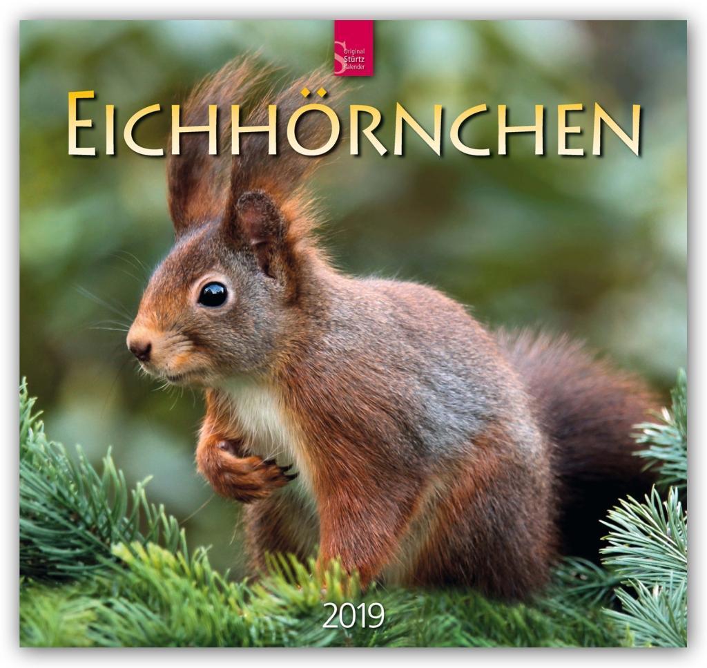 Eichh/örnchen 2019 Postkartenkalender