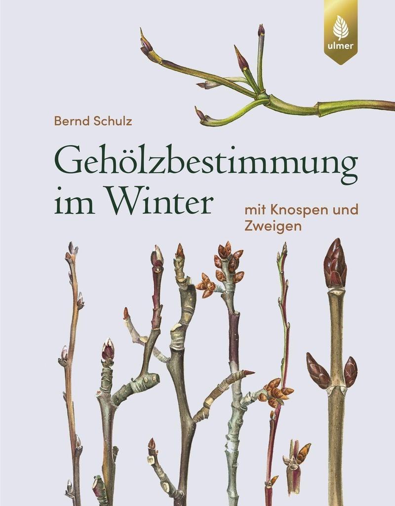 Geholzbestimmung Im Winter Buch Versandkostenfrei Bei Weltbild De