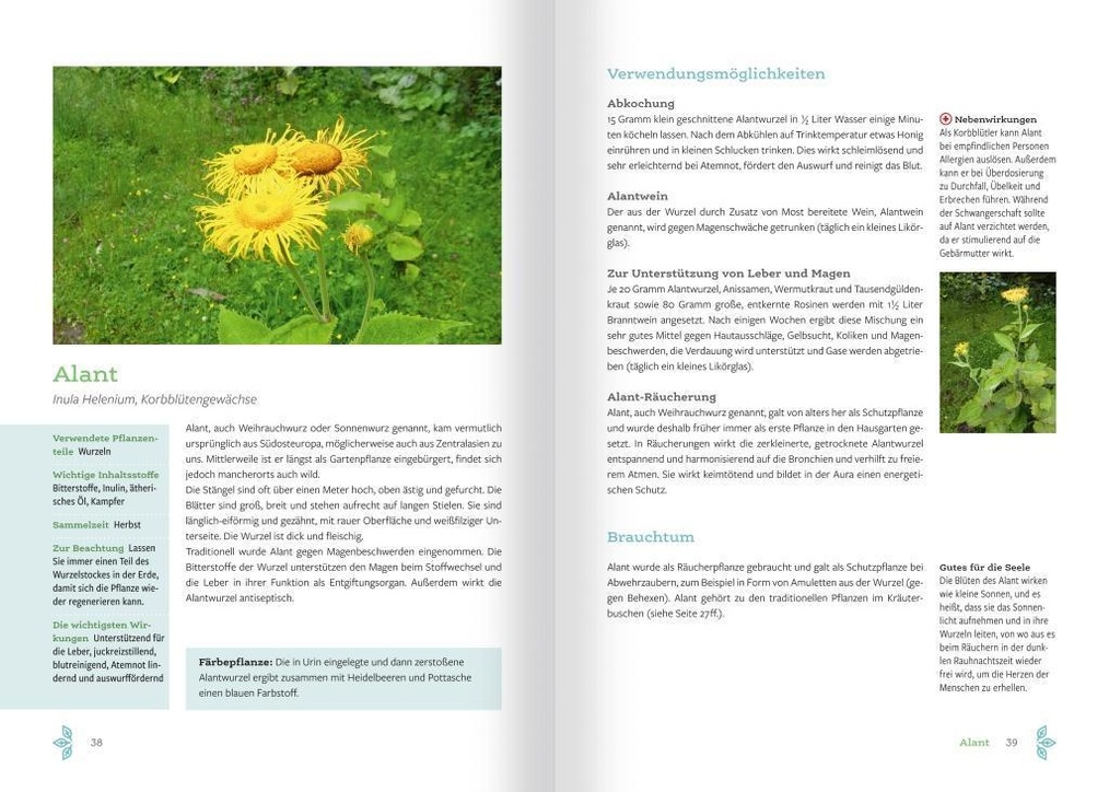 inula de diabetes heilpflanze