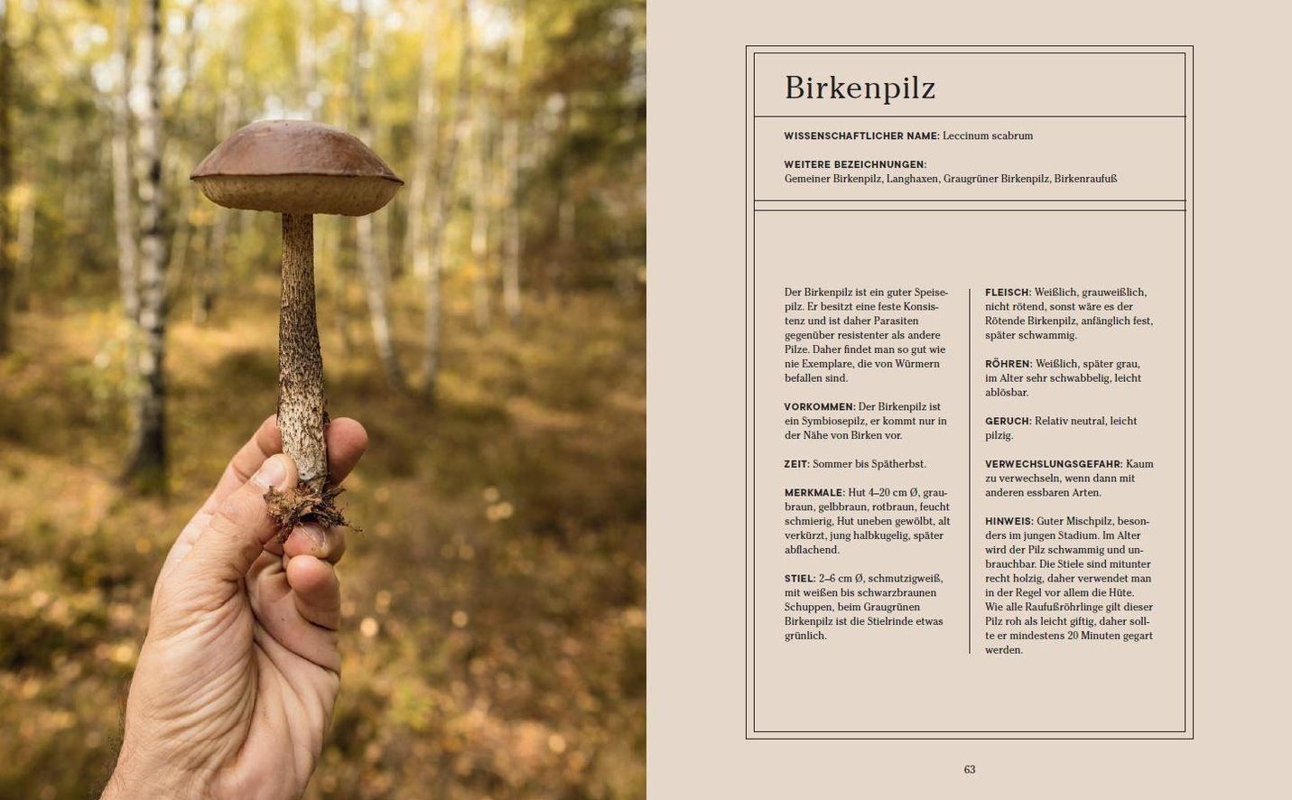 Wie man tibetische Pilze zur Gewichtsreduktion zubereitet