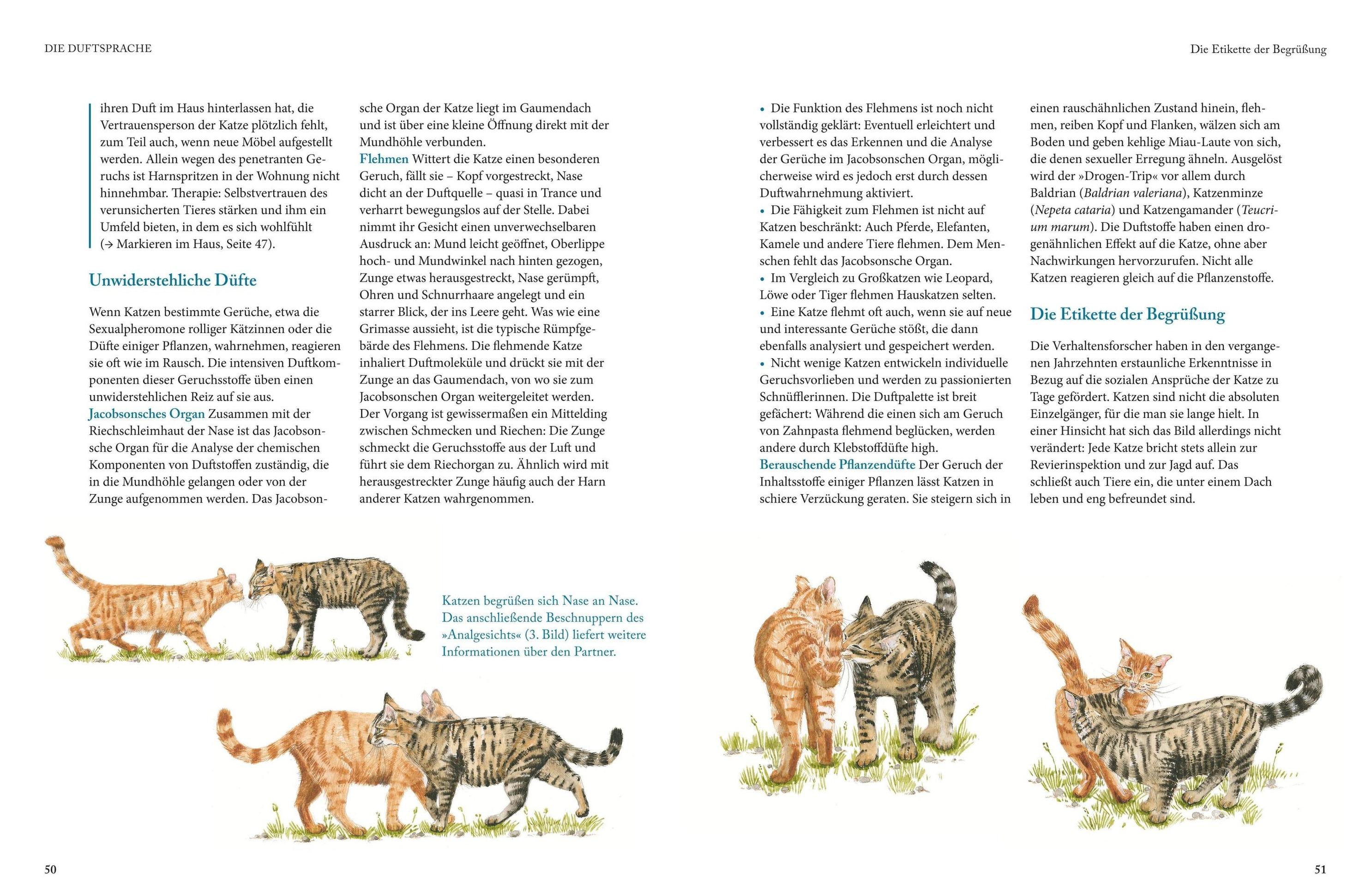 Katzensprache Buch Von Gerd Ludwig Bei Weltbild Ch Bestellen