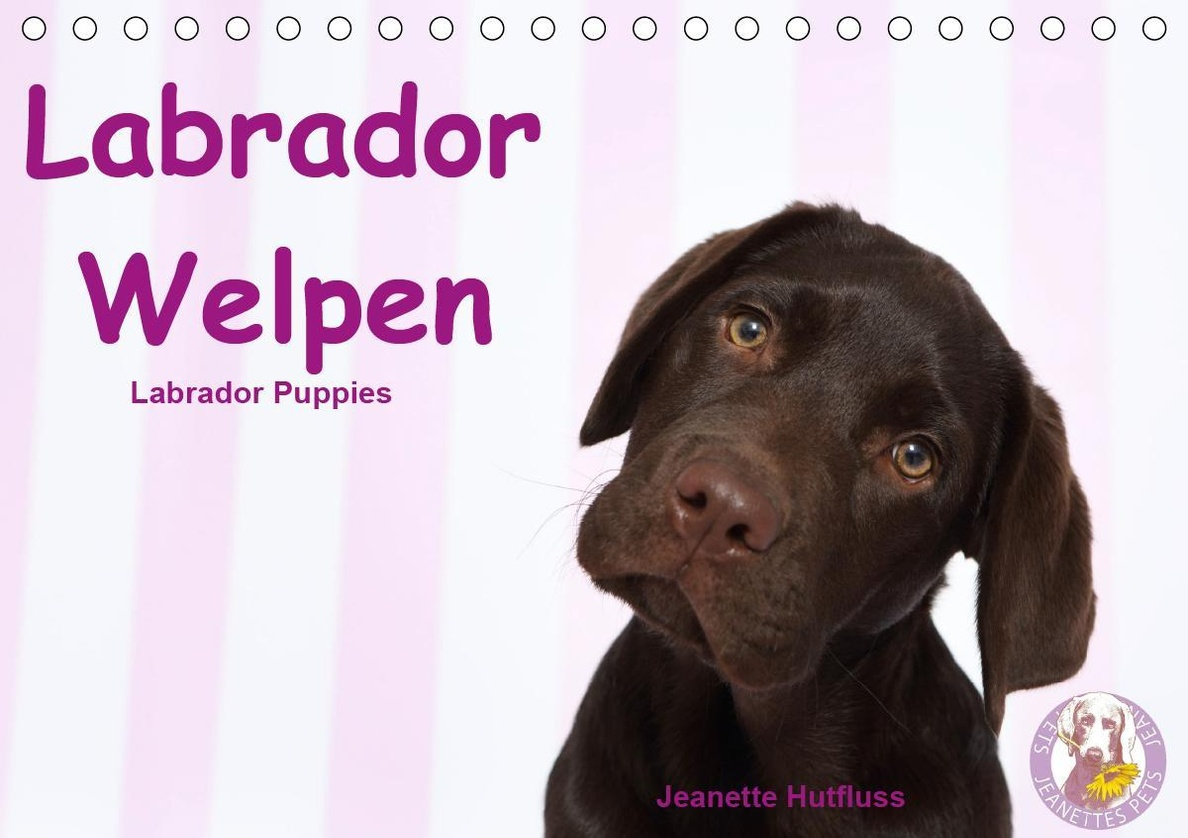 Labrador Welpen Labrador Puppies Tischkalender 2020 Din A5 Quer