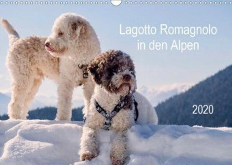 Lagotto Romagnolo In Den Alpen 2020 Wandkalender 2020 Din A3 Quer Kalender Bestellen