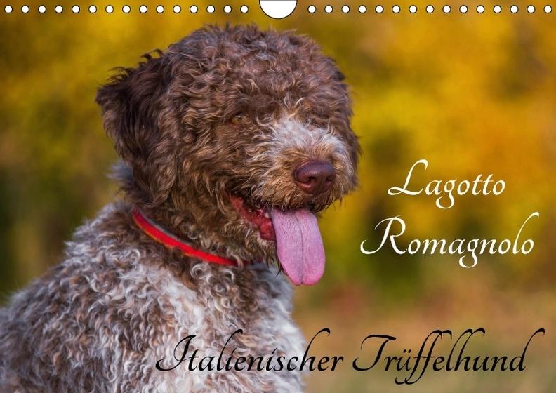 Lagotto Romagnolo Italienischer Truffelhund Wandkalender 2018 Din A4 Quer Dieser Erfolgreiche Kalender Wurde Dieses Kalender Bestellen