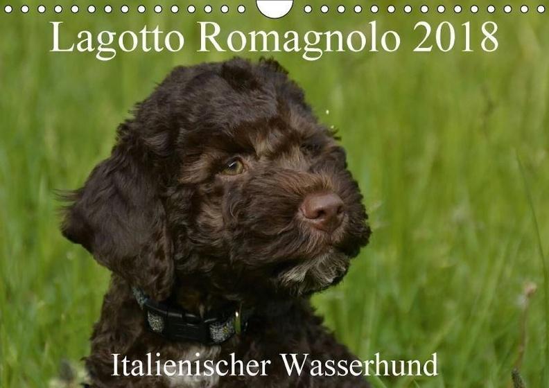 Lagotto Romagnolo Italienischer Wasserhund 2018 Wandkalender 2018 Din A4 Quer Kalender Bestellen