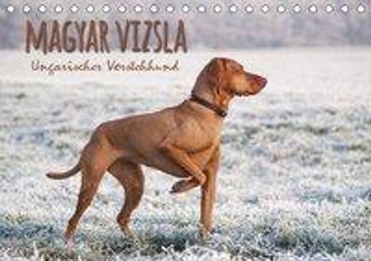 Magyar Vizsla Ungarischer Vorstehhund Tischkalender 2020 Din A5