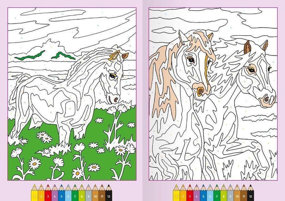 malen nach zahlen ab 7 jahren pferde buch jetzt online