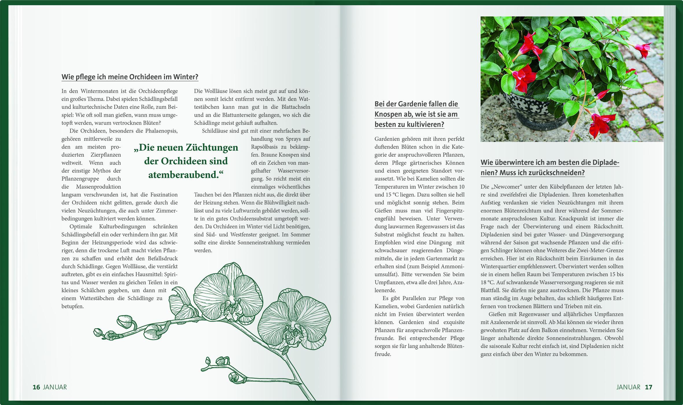 Blumen Sterne gr/ün 6er LEGO /® 100 gr/üne Pflanzen