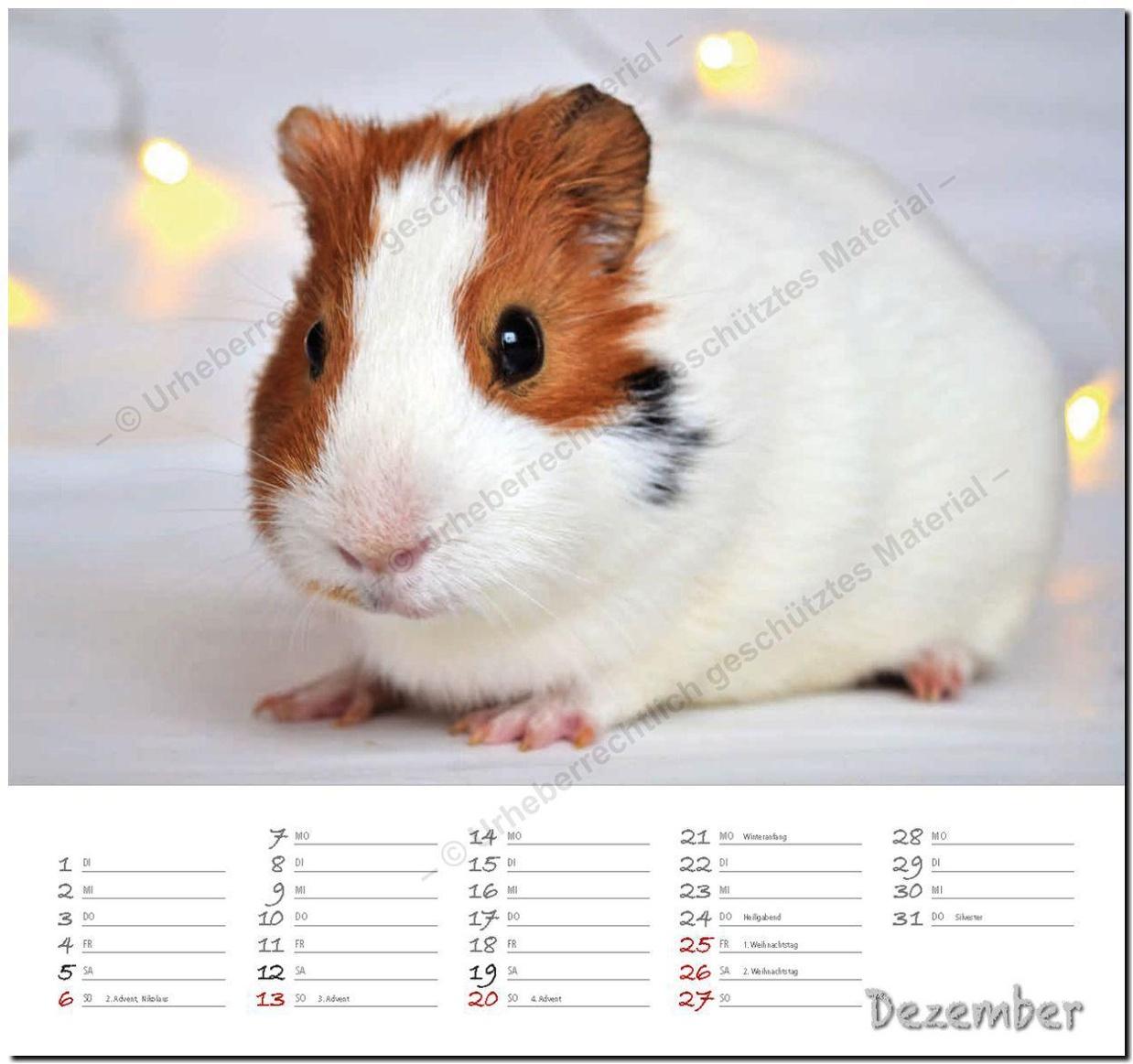 Meerschweinchen 2020 Kalender Gunstig Bei Weltbild Ch Bestellen