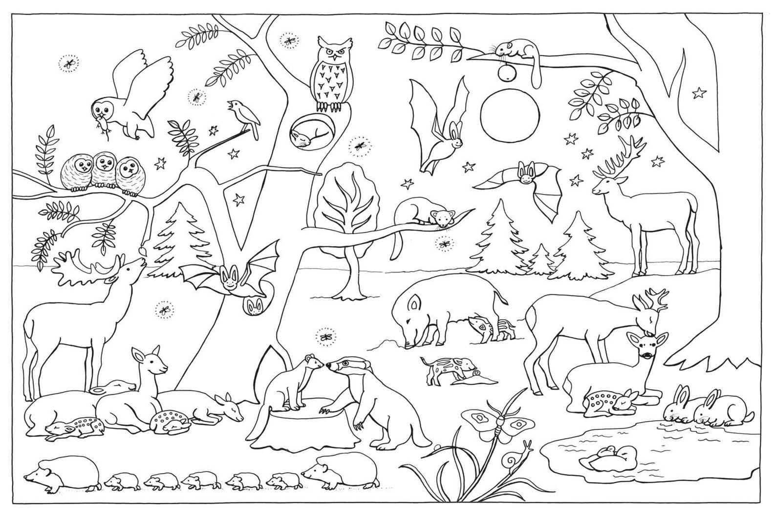 Mein Lieblings-Malbuch - Im Wald Buch jetzt online bei Weltbild.de