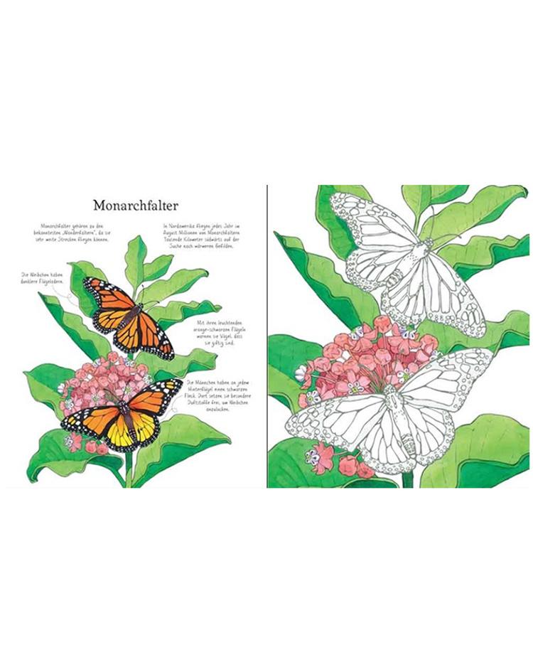 Schmetterling zum ausmalen 38 Schmetterling