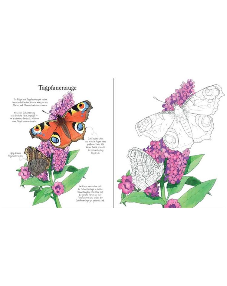 Für schmetterlinge erwachsene ausmalen zum Ausmalbilder Schmetterling