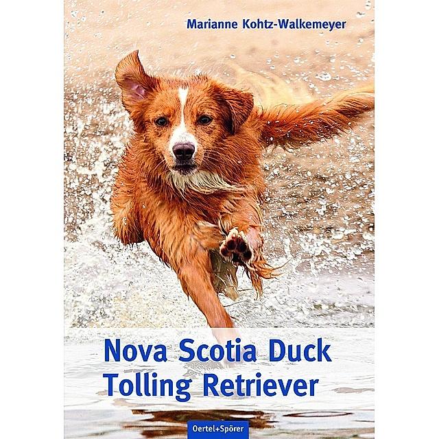 Nova Scotia Duck Tolling Retriever Züchter Baden Württemberg