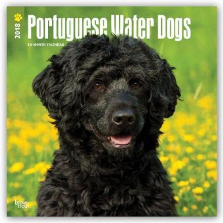 Portuguese Water Dogs Portugiesischer Wasserhund 2018 18 Monatskalender Mit Freier Dogdays App Kalender Bestellen