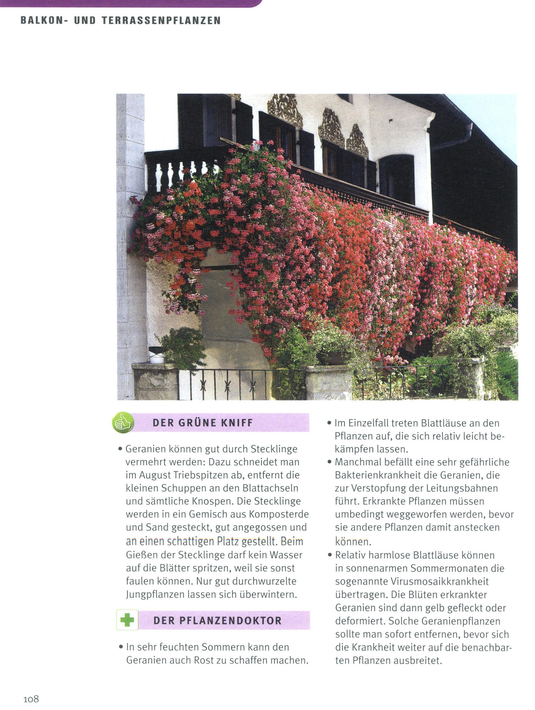 Praktischer Garten Ratgeber Von Gartner Potschke Buch Versandkostenfrei