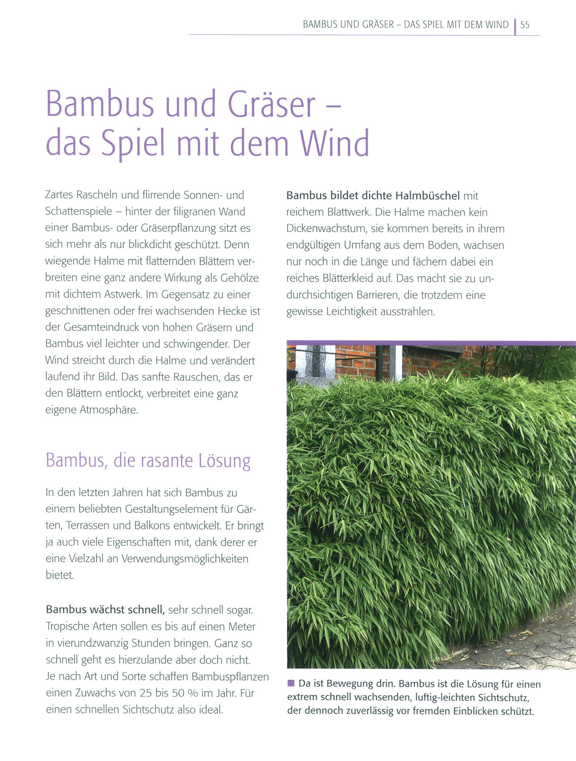 Sichtschutz Buch Von Barbel Faschingbauer Versandkostenfrei