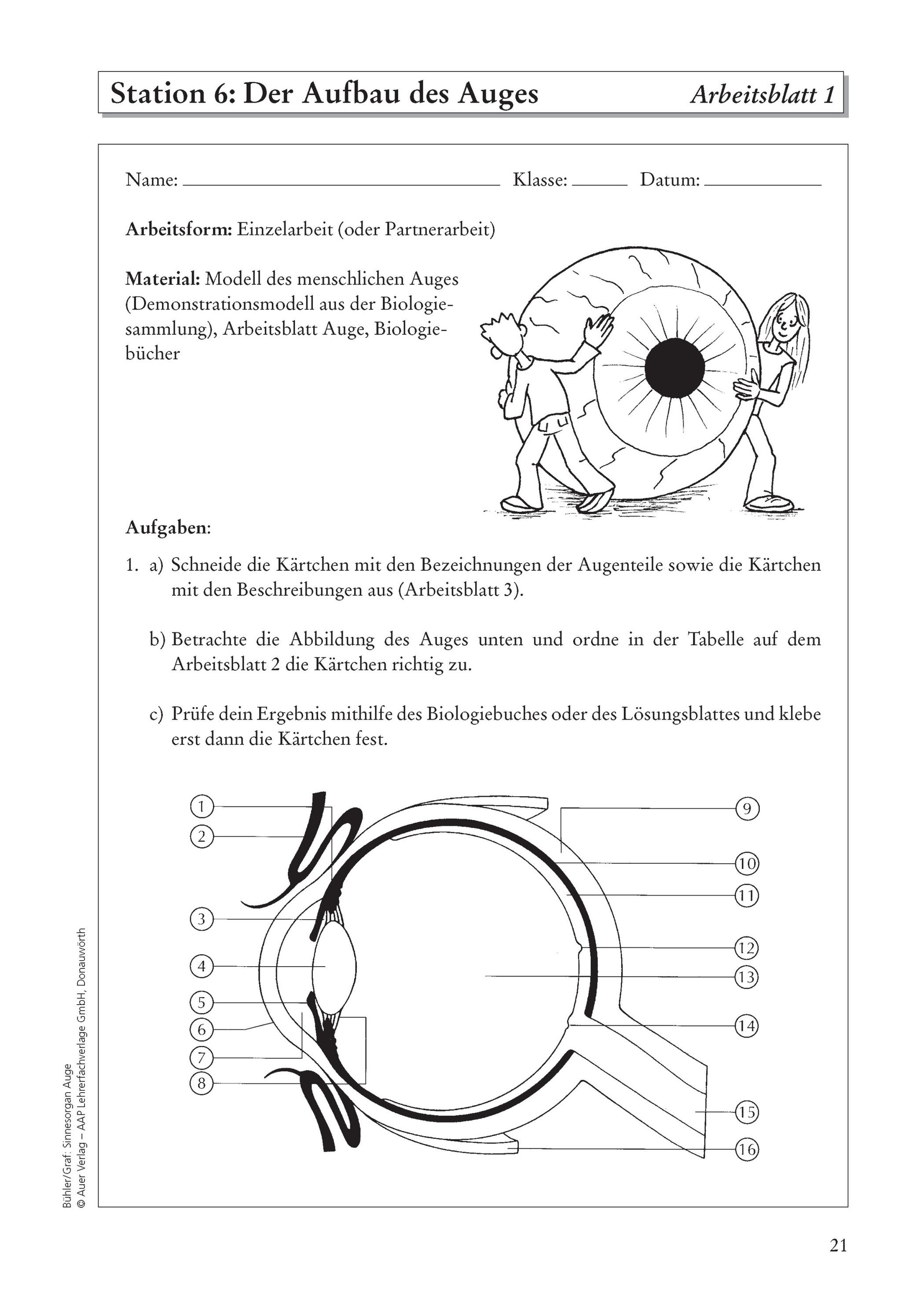 Sinnesorgan Auge Buch von Tanja Bühler versandkostenfrei bei ...