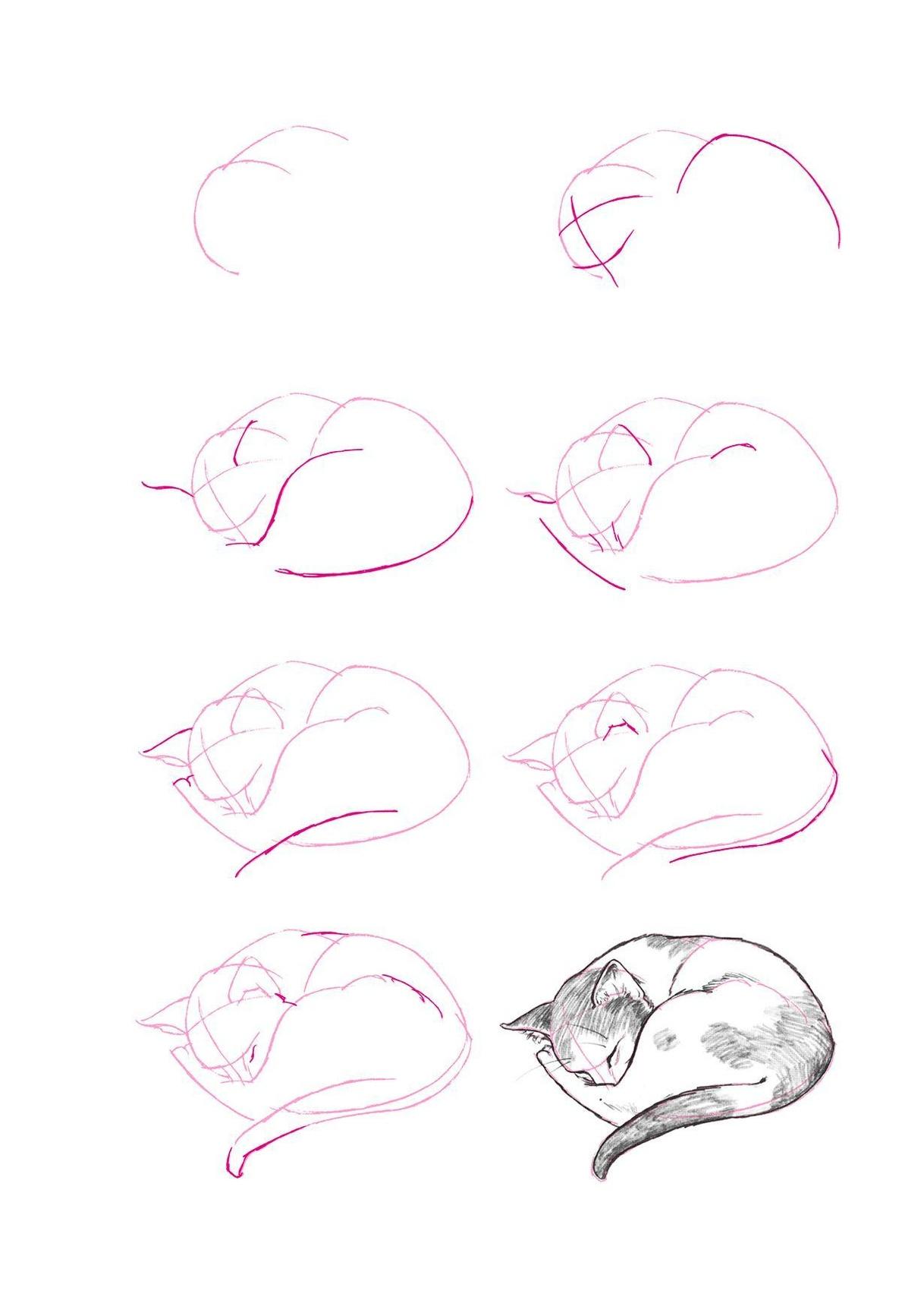Zeichnen tiere leicht zu Tiere Leicht