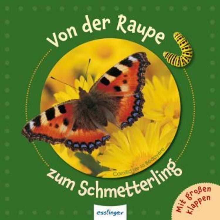 Von der Raupe zum Schmetterling Buch versandkostenfrei bei