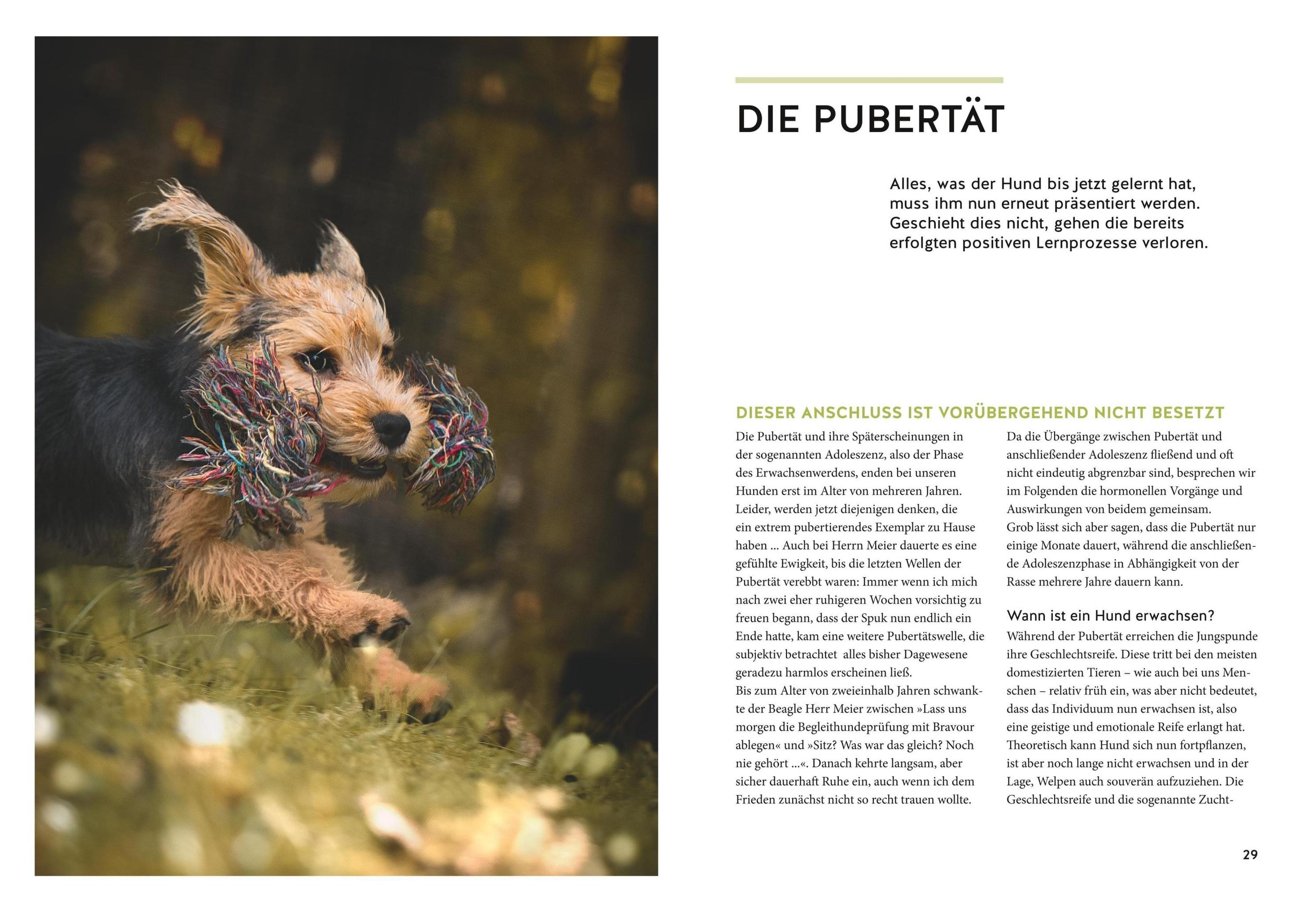 Wenn Der Welpe Zum Halbstarken Hund Wird Buch Versandkostenfrei Bestellen