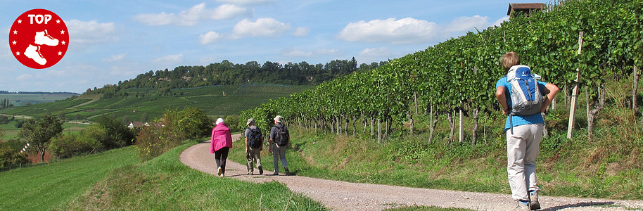 Wilchingen - Osterfingen - Wanderweg durch Weinberge