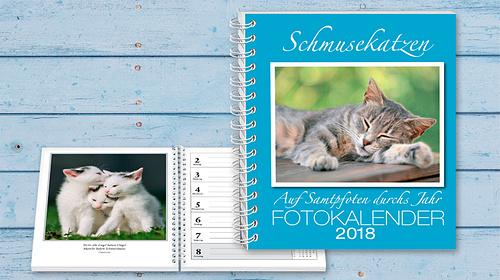 """Fotowettbewerb """"Schmusekatzen"""""""