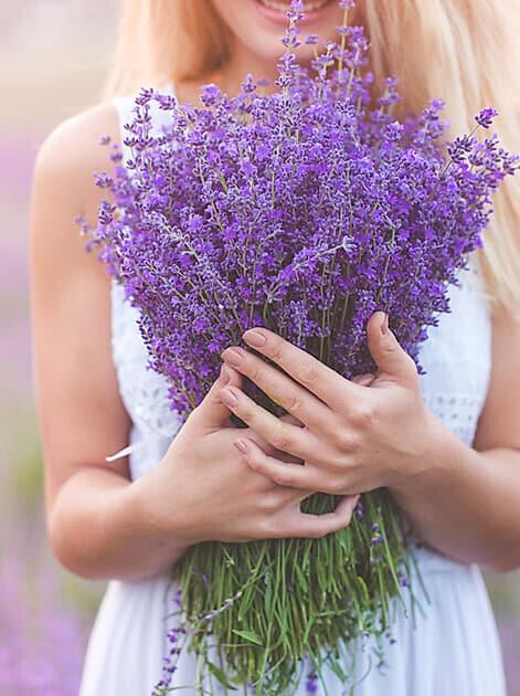 Duftend und wunderschön: Lavendel