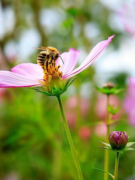So locken Sie Bienen in Ihren Garten