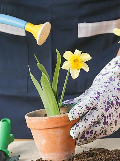 Gartenboden vorbereiten, Jungpflanzen vorziehen, Obstbäume schneiden - das gibt's jetzt im Garten zu tun