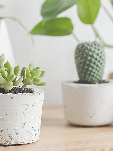 urban jungle: Zimmerpflanzen machen aus dem Wohnzimmer eine Wohlfühl-Oase
