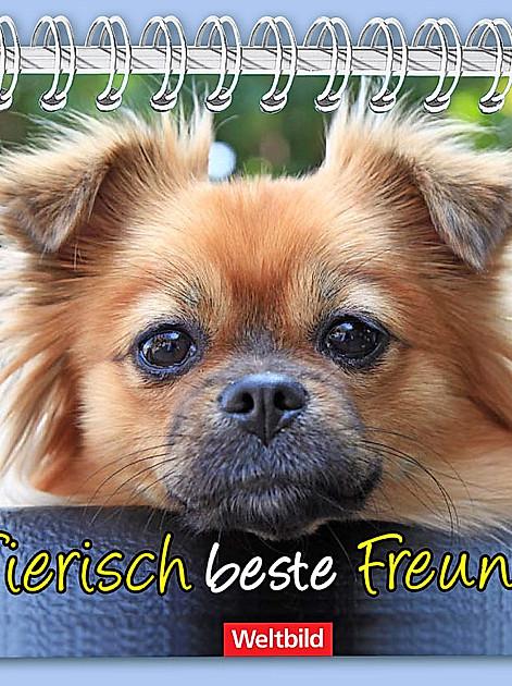 Gewinnspiel: Senden Sie uns Ihr Lieblingsfoto Ihres Haustiers! Tolle Preise!
