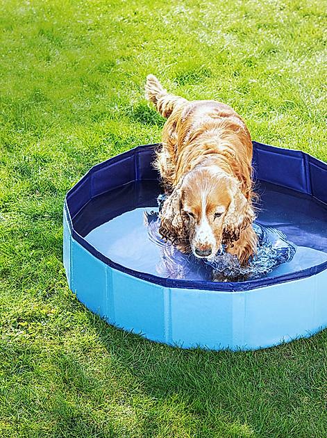 Hundeplantschbecken / Hundepool