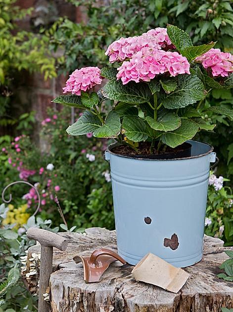 Genießen Sie den Sommergarten - das gibt's im Juli im Garten zu tun