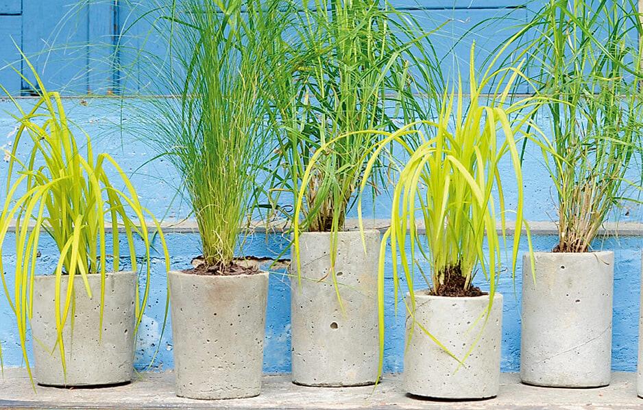 DIY-Pflanztöpfe aus Beton