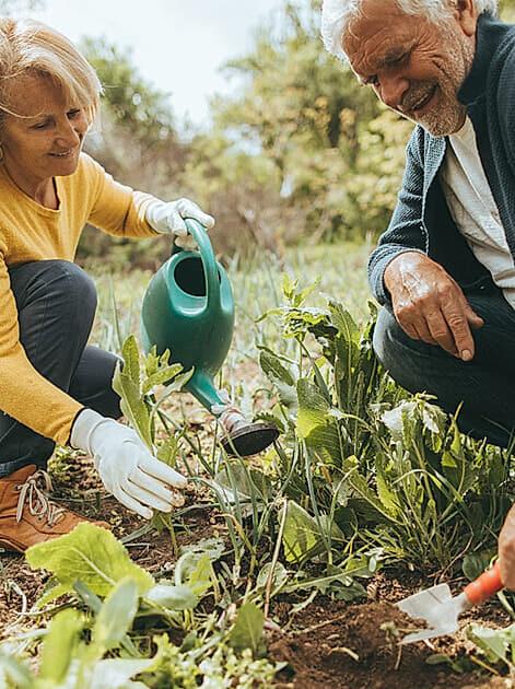 Älteres Paar bei der Gartenarbeit