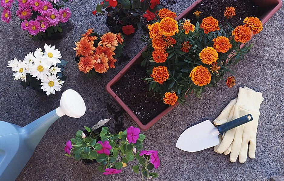 Blick von oben auf Blumentöpfe, Pflanztrog und Gartenutensilien