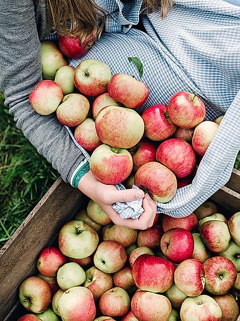 Für jede Gelegenheit die richtige Apfelsorte plus Apfel-Nährwerte