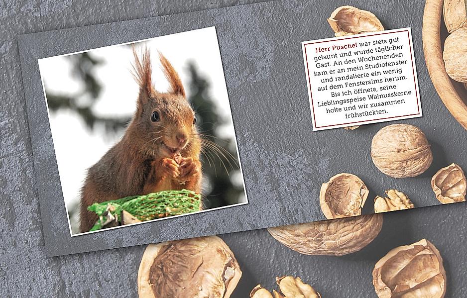Uli Stein: Beste Freunde – Eichhörnchen in meinem Garten