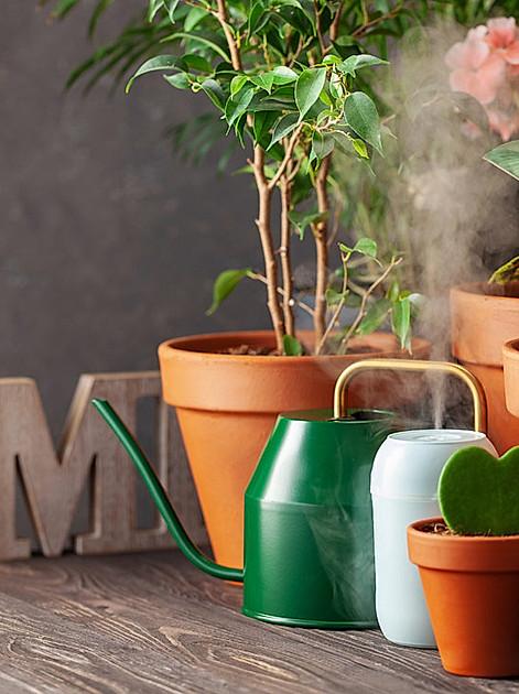 Luftreinigende Zimmerpflanzen für ein gesundes Wohnklima
