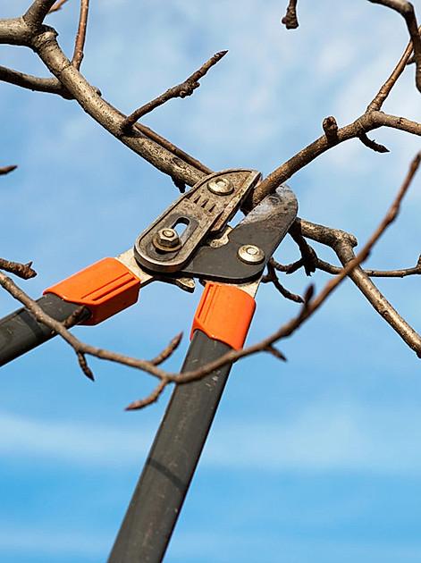 Bäume und Sträucher schneiden: Bringen Sie Ihren Garten jetzt in Form. Was Sie wissen müssen