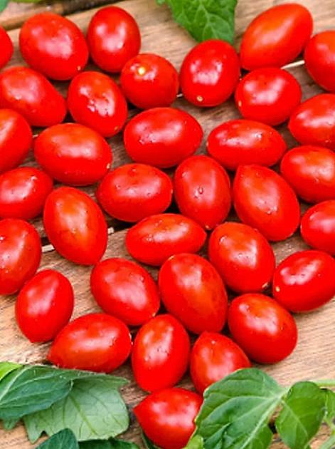 Tomaten vorziehen