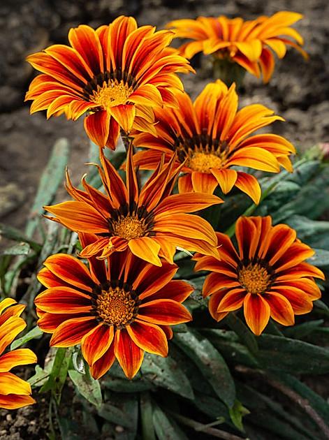Die besten Pflanzen für trockene Böden und Gärten