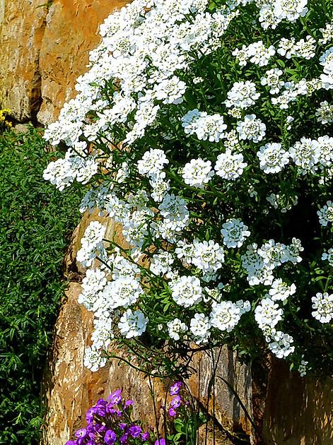 So können Sie unkompliziert einen pflegeleichten Steingarten anlegen