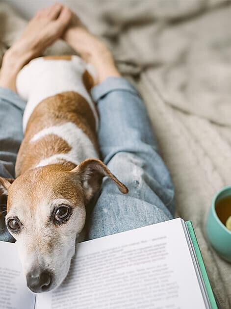Für diese Bücher sollten Sie Taschentücher griffbereit haben! Neue Lesetipps von Franziska Kurz