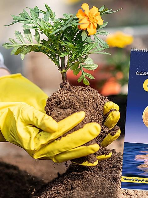 Wer sich bei der Gartenarbeit nach den Mondphasen richtet, kann profitieren