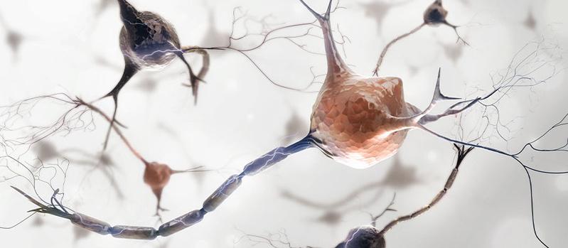 ALS - Amyotrophe Lateralsklerose